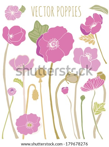 Collection of Purple Vector Poppy Flowers With Leaves, Stems, and Buds