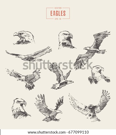 collection of realistic eagles