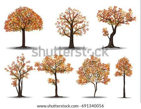 collection of red autumn tree