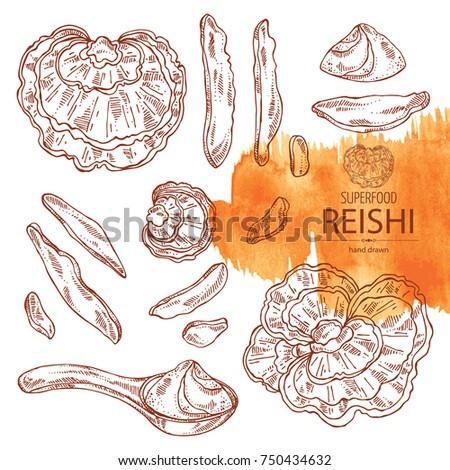 collection of reishi  mushroom