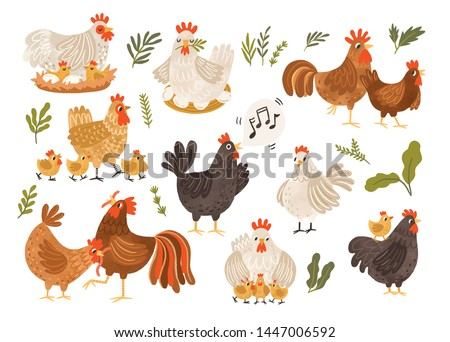 Collection of rooster, hen and chicks isolated on white background. Bundle of chicken with brood. Cute lovely family of domestic fowl or poultry birds. Childish flat cartoon vector illustration.