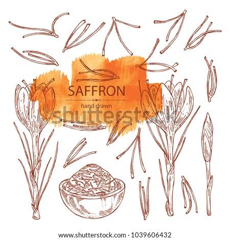 Collection of saffron: flower and saffron stamens. Vector hand drawn illustration.