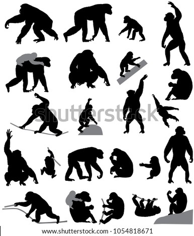 Collection of silhouettes of chimpanzees and its cubs