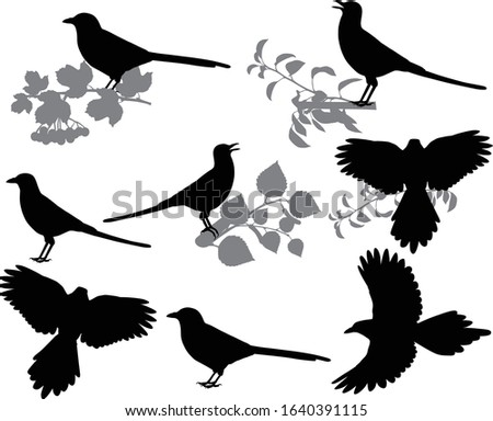 Collection of silhouettes of yellow-billed and black-billed magpies