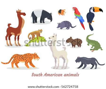 Collection of South American wild animals cartoon characters. Multicolor predators, herbivores and birds icons isolated on white background. Vector illustration set of South America fauna species