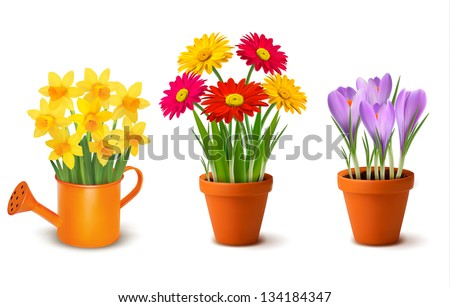 Collection of spring and summer colorful flowers in pots and watering can. Vector - stock vector