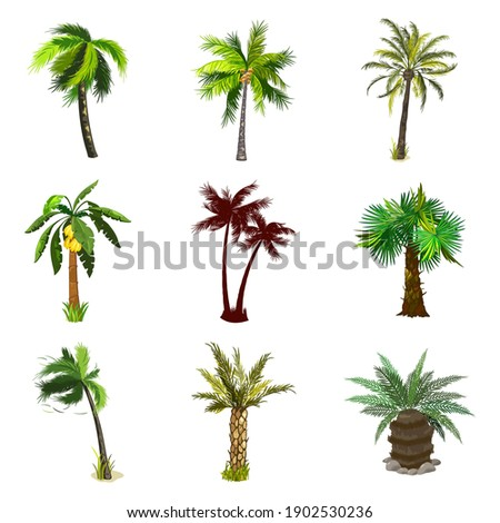 Collection of tropical forest, exotic fruitful tree, banana and coconut on plant. Vector nature, botanical and flora, desert island greenery, summer design isolated on white background Сток-фото ©