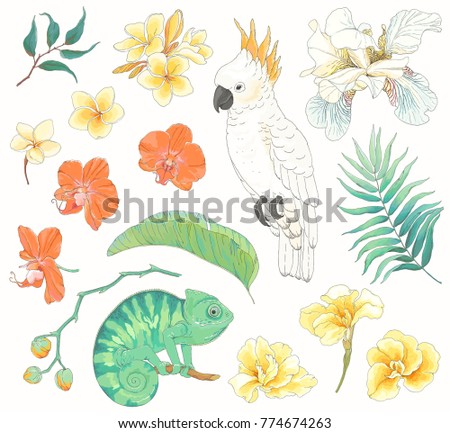 collection of tropical hand