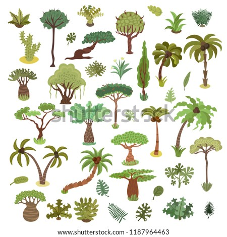 collection of tropical trees