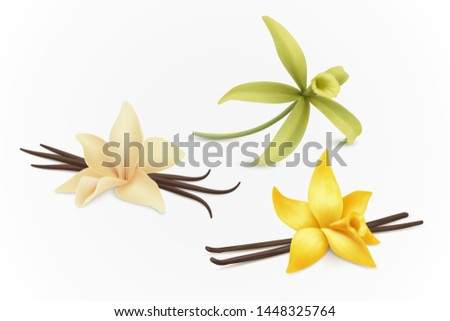 Collection of vanilla flowers, vector.