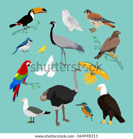 collection of various birds