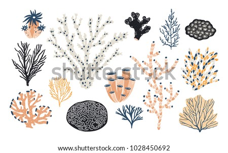 collection of various corals