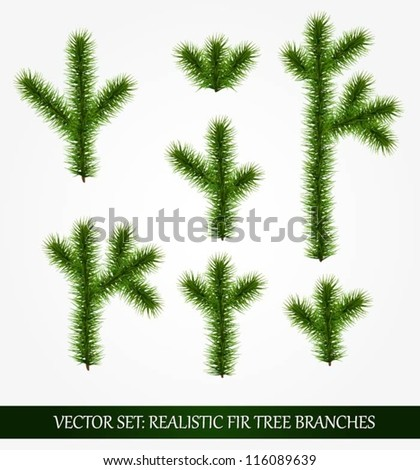 Collection of various fir tree branches