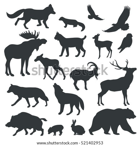 collection of vector detailed