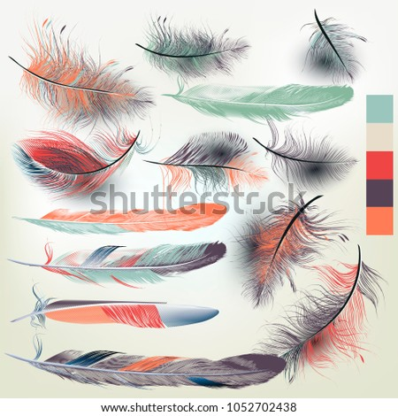 collection of vector feathers