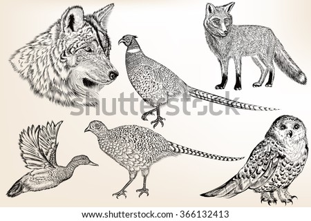 Collection of vector hand drawn animals in engraved vintage style for design