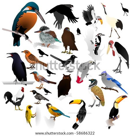 Collection of vector images of birds
