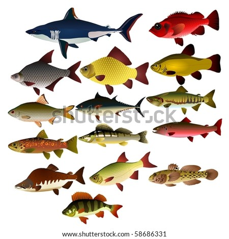 Collection of vector images of fishes