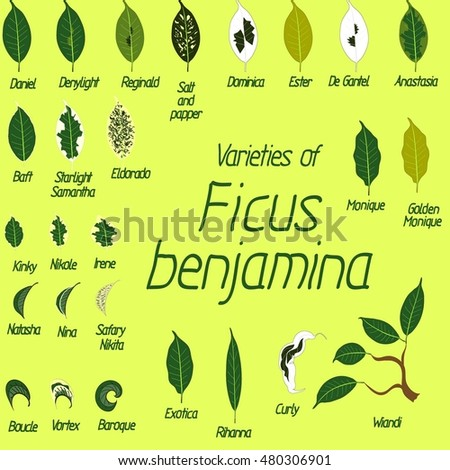 collection of vector leaves of