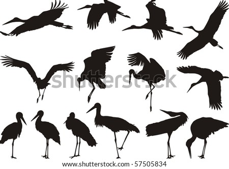 Collection of vector silhouettes on white storks