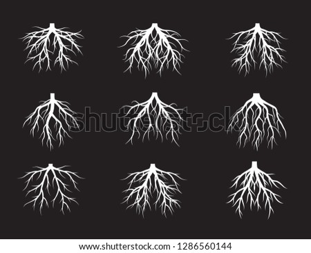 Collection of White Root Tree. Vector Illustration. Plants and garden.