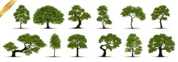 Collection  Realistic  Trees Isolated on White Background.