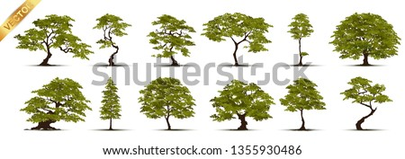 Collection  Realistic  Trees Isolated on White Background