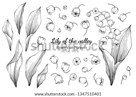 collection set of lily of the