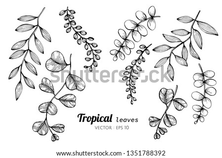 collection set of tropical