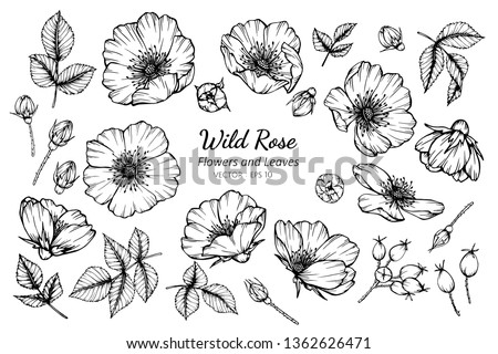 collection set of wild rose