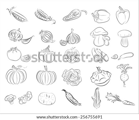 collection vector vegetables #256755691