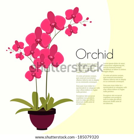 Coloful pink orchid with leaves in the pot