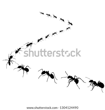 colony of marching ants, ant road Photo stock ©