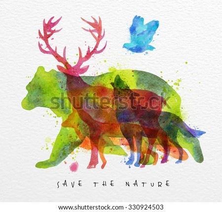 color animals  bear  deer  wolf