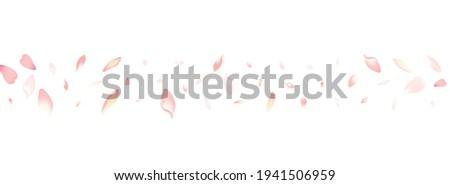 Color Apple Petal Vector White Background. White Springtime Lotus Petal Pattern. Cherry Petal Fresh Cover. Blossom Sakura Petal Template.