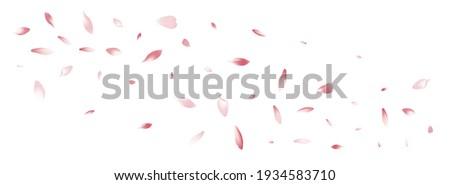 Color Cherry Petal Vector White Background. Pastel Air Rose Petal Backdrop. Sakura Petal Spa Frame. Floral Flower Petal Product.