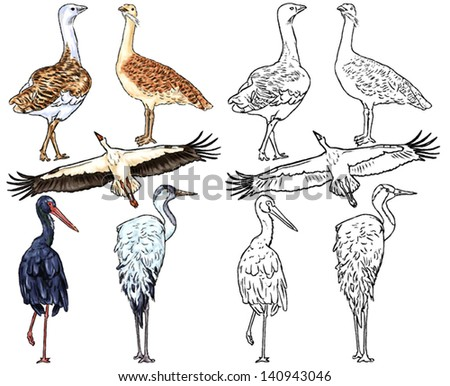 color drawing and contour of wild birds living on the riverbanks, rivers, lakes, plains, steppes, meadows and ponds, stork flying