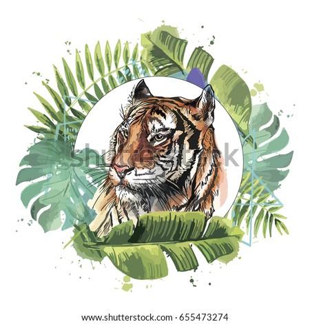 color illustration of a tiger