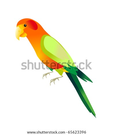 color parrot on white background