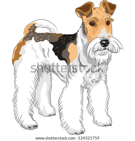 color sketch of the dog Wire Fox Terrier breed standing