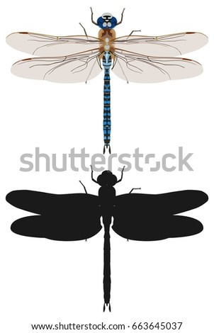color vector dragonfly pattern