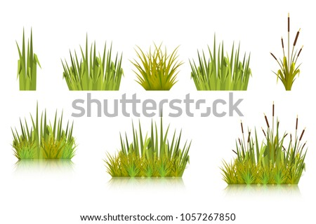 Color vector image of a green reeds grass and a number of coast plants on a white background. Illustration of spring sprouts and weeds in a pasture or garden. Stock vector