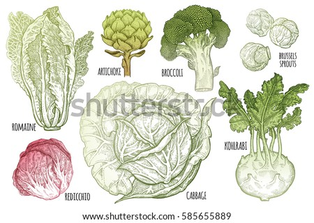 color vegetables set. isolated...