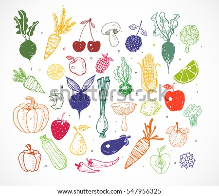 Colored Doodle fruits and vegetables isolated on white. Vector sketch illustration of healthy food.