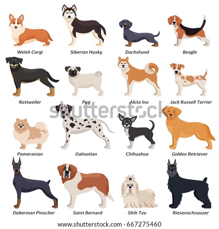 colored purebred dogs icon set
