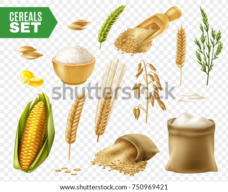 Colored realistic and isolated cereals transparent icon set with steps of production vector illustration #750969421