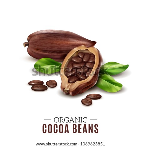 Colored realistic cocoa composition with organic cacao bean headline and broken beans vector illustration