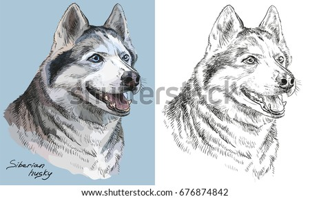 colored siberian husky portrait