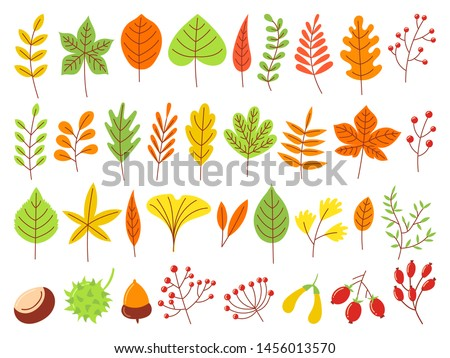Colorful autumn leaves. Autumnal yellow leaf, forest nature orange leafage and september red leaves. Chestnut, dog rose and viburnum or foliage leaf. Flat isolated icons vector set