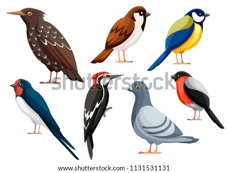 colorful bird collection